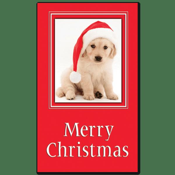 C293 - Santa Pup