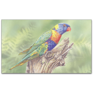C717 - Rainbow Lorikeet
